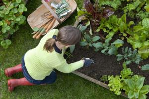 Weeding A Corner of the Vegetable Garden